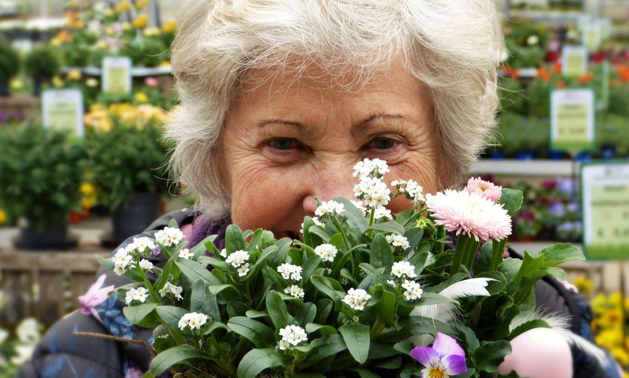 цветы для пожилых